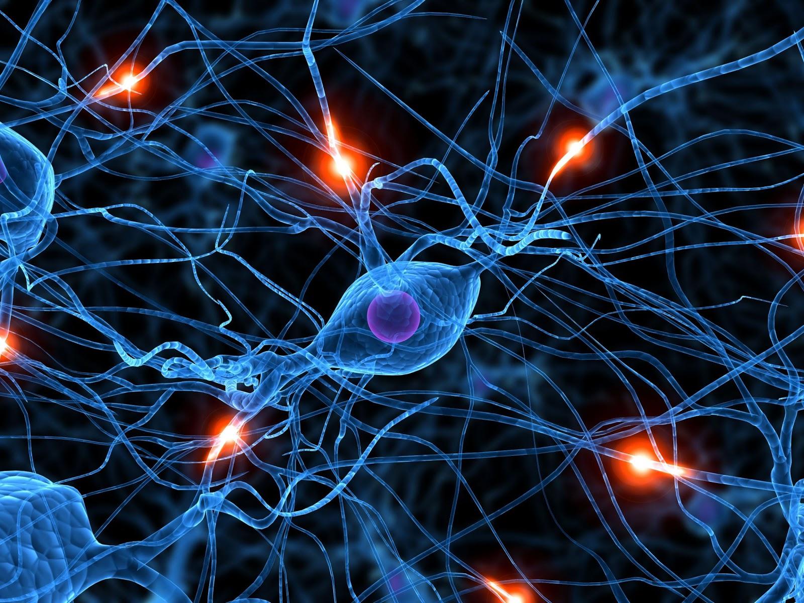 Neuronas-en-acción