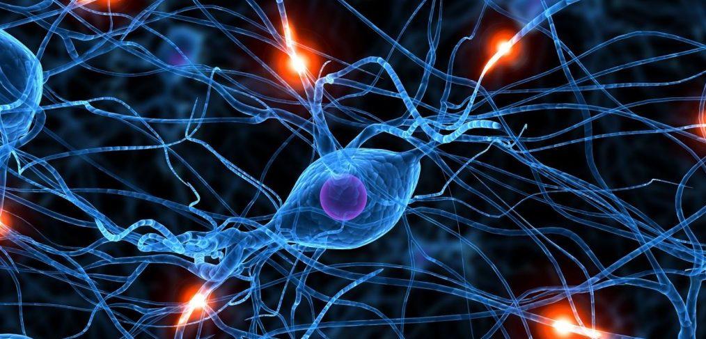 Estímulos que activan el cerebro reptil