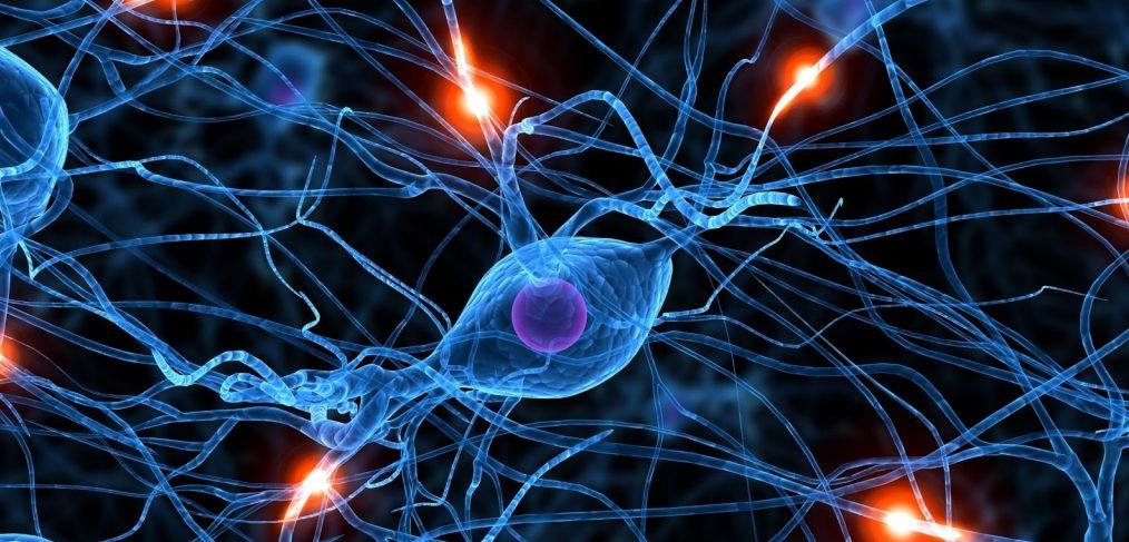 estimulos-cerebro
